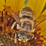 Buzz Off! thumbnail