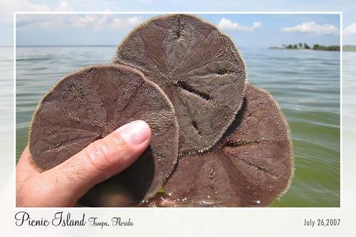 Picnic Island Park (Tampa, Florida)