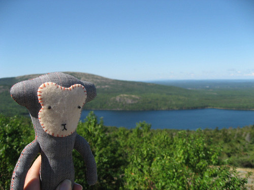 carotte climbs Cadillac Mountain
