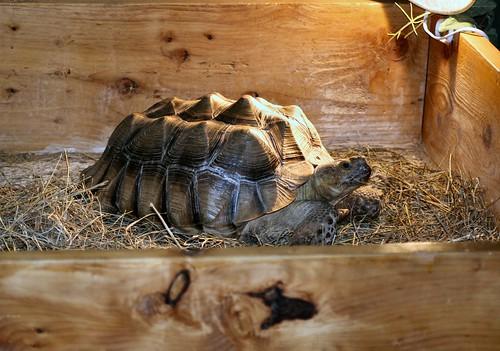 ortoise the tortoise