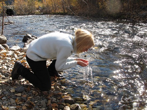 Patricia Coates, Director of the Sense of Place project, drinks from the pure waters of Wolf Creek, Tombstone Territorial Park. 316