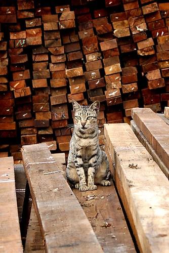 Port Cat