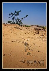 Kuwait Desert (Hamad Al-meer) Tags: tree canon landscape eos desert hd kuwait hamad 30d artphoto kuwaitphoto kuwaitartphoto kuwaitart
