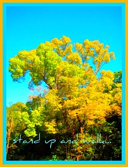 stand up and walk... (IDIAY) Tags: light tree love luz yellow peace amor paz bluesky newyear amarillo rbol nuevoao