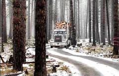 a logging road through Plum Creek's land (by: Michael Gallacher/Missoulian)