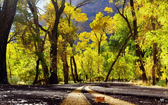 Light and Colors of Zion -See it bigger please. Thanks (NikonKnight) Tags: park autumn tree fall leaves nationalpark lodge grotto zion np watchman thegrotto zionslodge