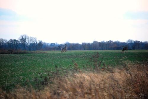 Oh deer2