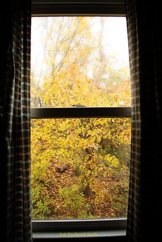 Autumn Window - 319:365
