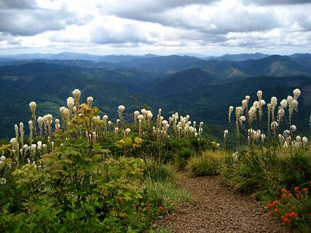 Kings Mountain Vista
