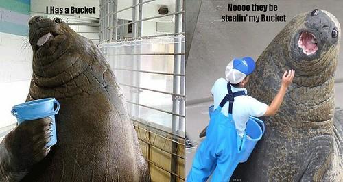590531690 801fb8713f Funniest Animals