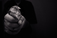 The Gift (Luis Montemayor) Tags: bird eye mike miguel mexico ojo df hand cluster explore gift mano pajaro regalo condesa supershot diamondclassphotographer