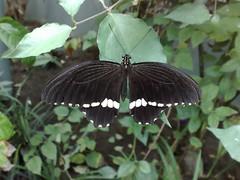 07072007199 (mobytoby) Tags: amsterdam artis vlindertuin