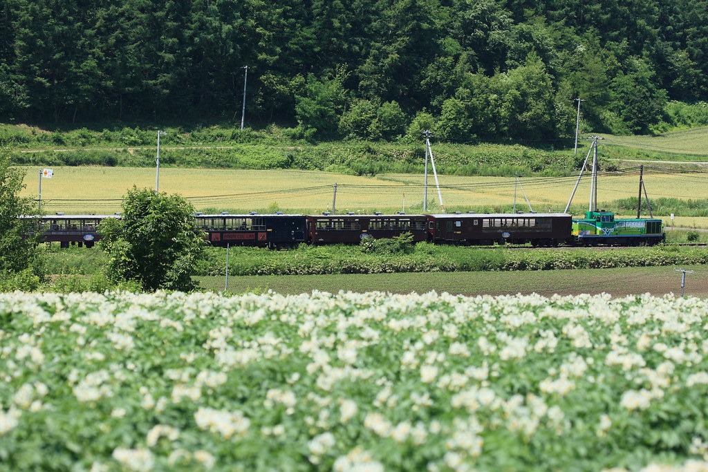 Special train and potato's field