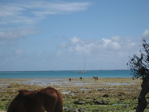 Marcy alone in the bay Niuatoputapu