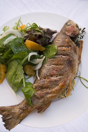 trout salad 4