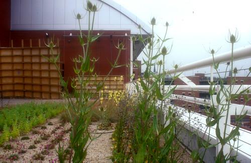 LGI Roof Garden