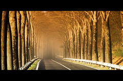 tunnel of... light (David Butali) Tags: road autumn trees light lines fog canon alley strada guardrail nebbia autunno marche sul 24105 viale 500d metauro mercatello canopes leuropepittoresque magiayfotografia dylan66