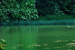 Zielony Staw 09 (Hejma (+/- 4400 faves and 1,4 milion views)) Tags: green water river landscape spring flora poland polska natura zielony woda wiosna rzeka krajobraz jurakrakowskoczstochowska wiercica polishjura coloursofwater barwywody