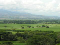 Valle del Cauca (Cauca River Valley) - Colombia (CAUT) Tags: cane del colombia valle sugar azucar azúcar sugarcane caña cauca cañadeazúcar