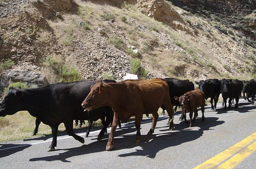 Wyoming Traffic Jam
