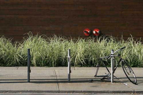 Urban Garden & a half-stolen bike
