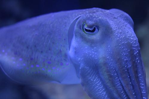 Cuttlefish: go.