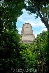 Descubriendo Tikal (Alexsander7) Tags: guatemala catedral tikal peten centroamerica