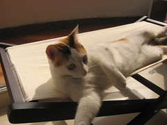 Stretch (lagatamona) Tags: cats hamacas