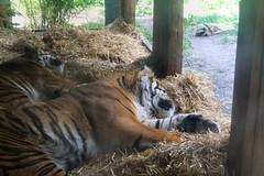 London Zoo #33