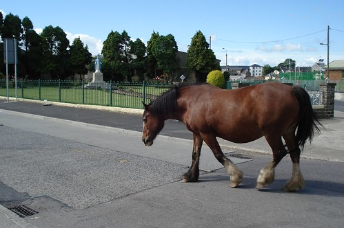 A horse without owner