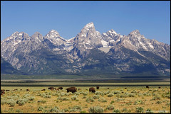 Bison on Antelope Flats ([Christine]) Tags: mountains searchthebest wyoming tetons bison grandtetonnationalpark naturesfinest antelopeflats abigfave anawesomeshot