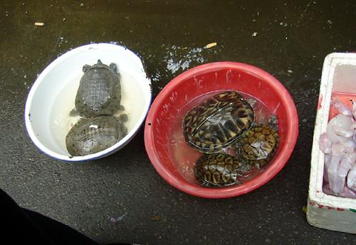 老百姓买一龟鳖回家炖个汤是家常便饭。