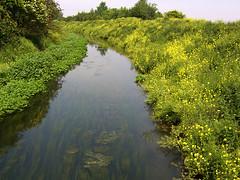 Louth Navigation with Wild Rape (john stanbridge) Tags: geotagged canal rape lincolnshire navigation brassicanapus samsungdigimaxa7 eastlindsey alvingham geo:lat=53400261 geo:lon=0056214 mawep johnstanbridge