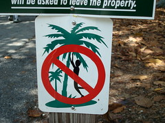 No Dancing With Palm Trees