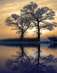 Pickering tree sunset (Corica) Tags: uk greatbritain trees sunset england water clouds yorkshire relection northyorkshire pickering northyorkshiremoors corica casioexp600