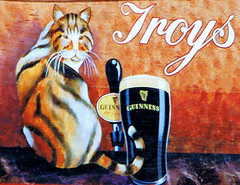 A KILKENNY CAT (Edward Dullard Photography. Kilkenny, Ireland.) Tags: kilkenny ireland irish erin photographic eire hibernia emeraldisle irlanda irlande ierland eireann dullard ukandireland societyedward