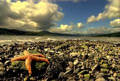 YOU'RE A STAR (Nicolas Valentin) Tags: summer cold star scotland fishing starfish windy naturesfinest rhu abigfave misfotosfavoritas caugh4mackrel greatdayfishing