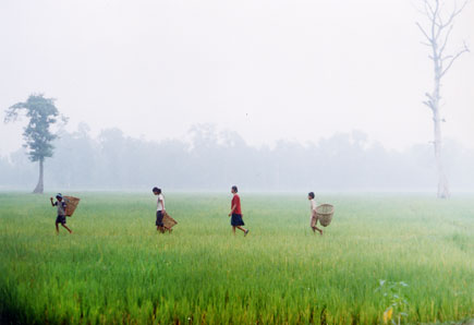 Saturday morning, children make their way through a rice field in Bardiya, Western Nepal, on a September Satruday morning, 2004 by Kashish Das Shrestha