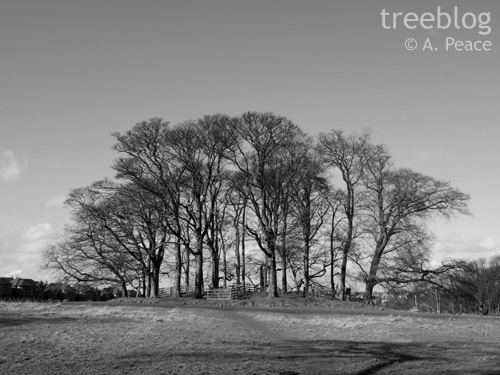 trees on a mound