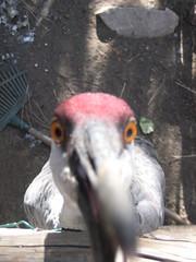 Moonridge Zoo in Big Bear, California