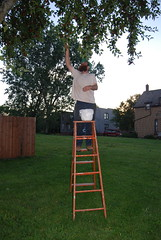PH_PickinCherries_013_061910_ajv (ajviola) Tags: aj rachel cherries jon north detroit oren pickin corktown