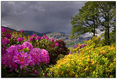 My kind of weather! (jasontheaker) Tags: uk sun storm contrast garden lakedistrict cumbria coniston rhododendrons langdales landscapephotography brantwood jasontheaker