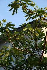200706 094 (shinyai) Tags: japan aomori hirosaki