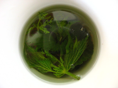 Nettle Tea For Hair Growth And Clear Skin