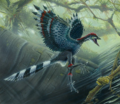 Archaeopteryx lithographica by Marshall