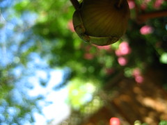 the DOF swap (Alex Merenkov photography) Tags: park camera trip flowers school trees light sky food sun white abstract flower macro tree art water beautiful clouds speed canon reflections garden weird frozen store shiny colorful long exposure different shadows close wind time walk bees flash low taken bubbles blowing insects images iso ups shutter daycare ripples rays bouquet shovel assortment 2mp talented 2007 apart 6mp 11500 alexmerenkov