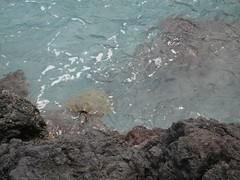 Day13_Hawaii (4) (Amudha Irudayam) Tags: beach hawaii bigisland amu amudha