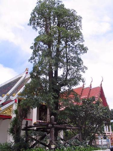 Wat Krathum Sueapla