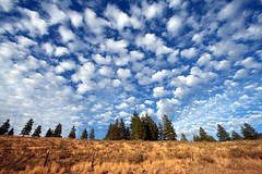assembly (Vida Morkunas (seawallrunner)) Tags: camping trees beauty grass clouds evening washington bravo sundown hiking winthrop hill wilderness northeast splendor cwall