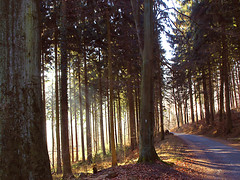 Der Sonne entgegen (dolorix) Tags: winter forest germany deutschland wald sonnenstrahl sunray naturesfinest lberg